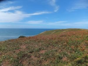 'Muttonbird' Island