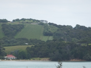 Te Whau vineyard and restaurant on the headland